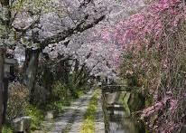 京都①哲学の道 (2)