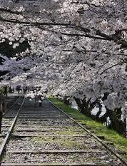 京都②蹴上リンクライン (2)