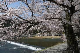 嵐山公園⑤桜